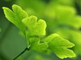liste des plantes medicinales avec photos