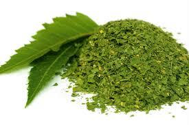 les bienfaits du neem