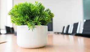 plante anti stress et fatigue